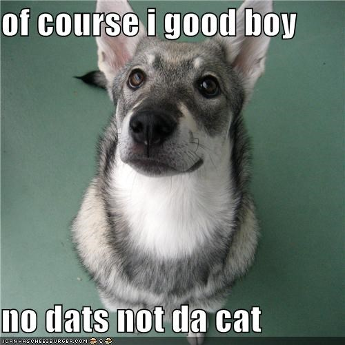 of course i good boy  no dats not da cat