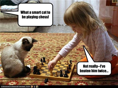 What a smart cat to be playing chess!