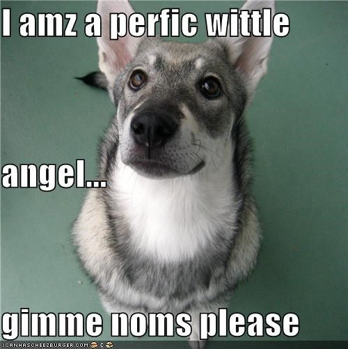 I amz a perfic wittle angel... gimme noms please