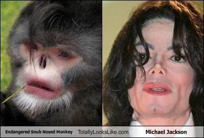 Hall of Fame,michael jackson,monkey,nose,plastic surgery,snub nosed monkey