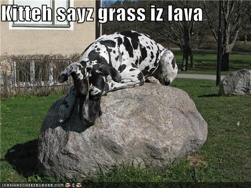 cat,grass,great dane,kitteh,kitty,lava,mean cat,trick