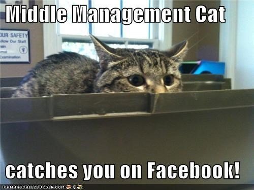 Middle Management Cat   catches you on Facebook!