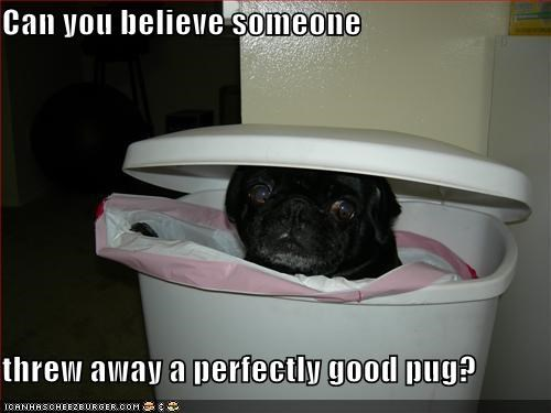 Can you believe someone  threw away a perfectly good pug?