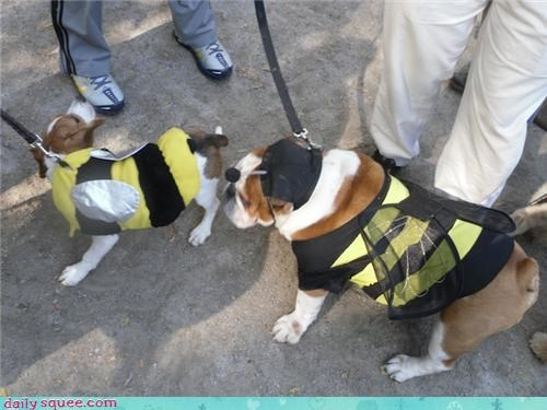 Bumblebee Dogs