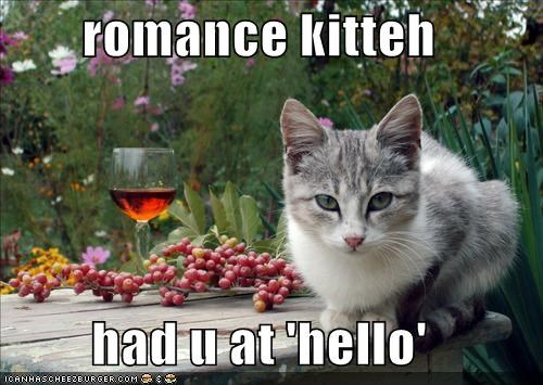 romance kitteh  had u at 'hello'