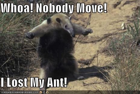 Whoa! Nobody Move!  I Lost My Ant!