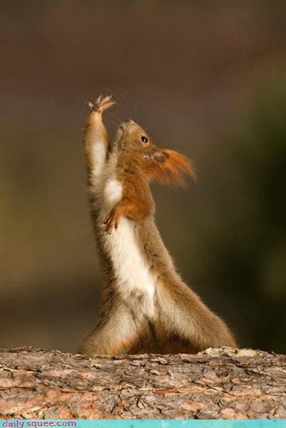 Squirrel auditions for Glee