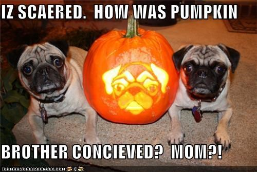 IZ SCAERED.  HOW WAS PUMPKIN  BROTHER CONCIEVED?  MOM?!