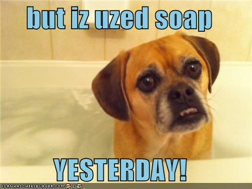 bath,mastiff,mixed breed,not fair,protesting,soap,unhappy,yesterday