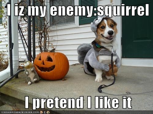 I iz my enemy:squirrel          I pretend I like it