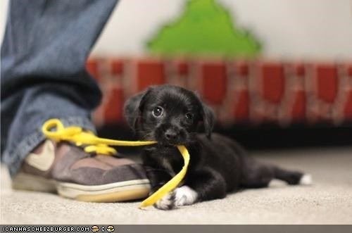 Cyoot Puppeh ob teh Day: Ur shoez untaid! U no can leevz!