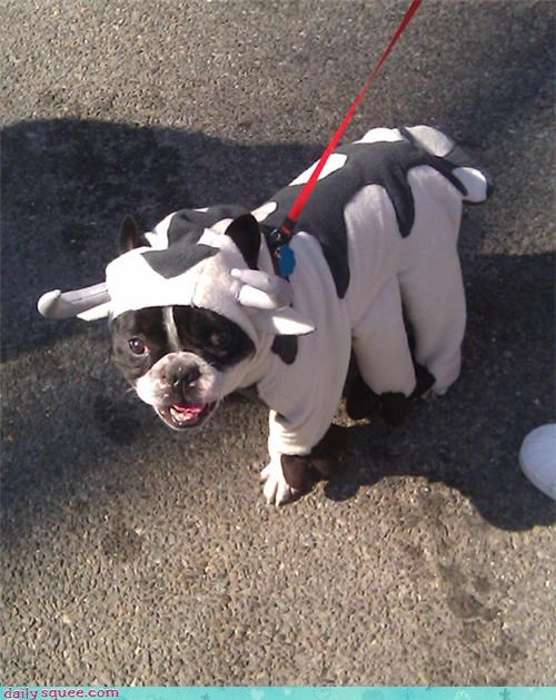 This is our dog Remy dressed as Appa.