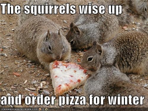 The squirrels wise up  and order pizza for winter