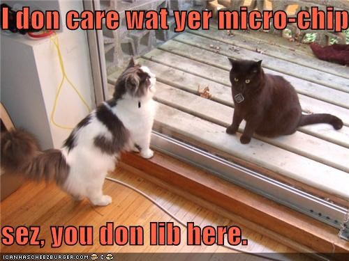 caption,captioned,cat,dont,dont-care,here,live,microchip,mistake,you