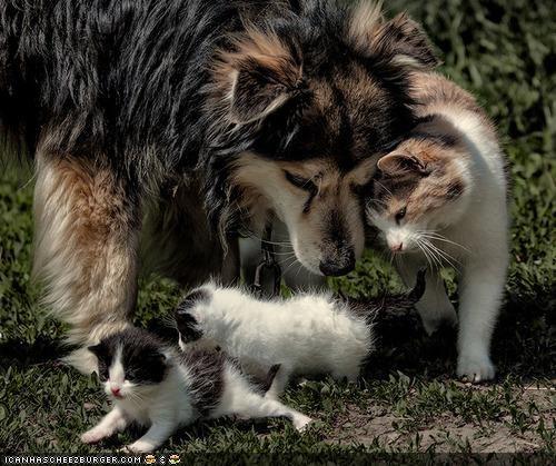 aww,dogs,family,goggies r owr friends,kitten,sweet
