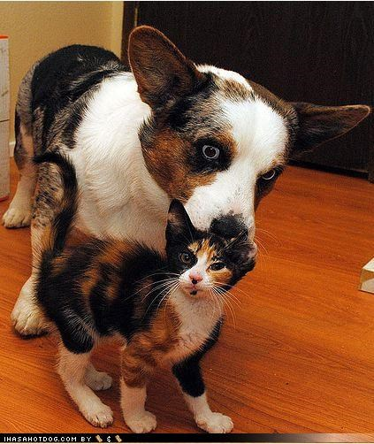 cliché,coloration,corgi,cute,friendship,fur,kitten,love,matching,patterns,sweet,themed goggie week