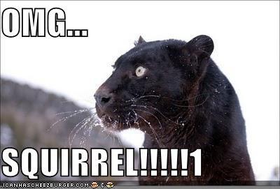 animals,cat,critters,dogs,Dug,panther,pixar,squirrel