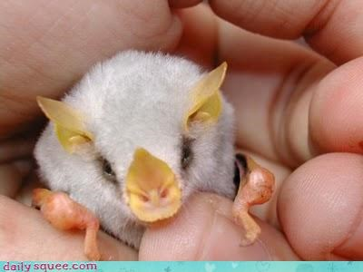 Fluffy Marshmallow Bat