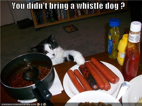 You didn't bring a whistle dog ?