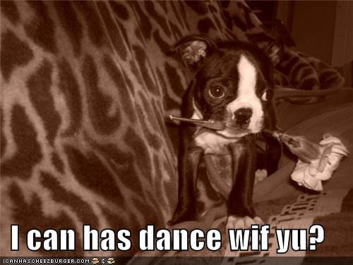 I can has dance wif yu?