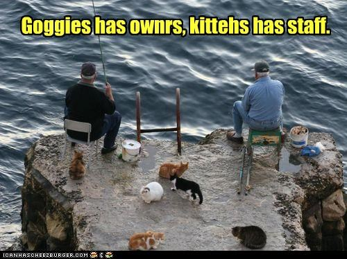 bait,bucket,caption,captioned,cat,Cats,difference,fishing,goggies,owners,perception,proverb,servants,staff,waiting