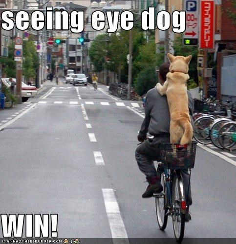 seeing eye dog  WIN!