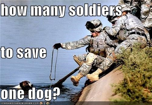 how many soldiers to save one dog?