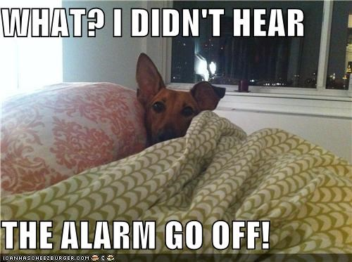 WHAT? I DIDN'T HEAR  THE ALARM GO OFF!