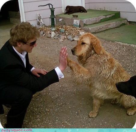 dogs,suit,wet