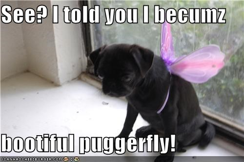 See? I told you I becumz  bootiful puggerfly!