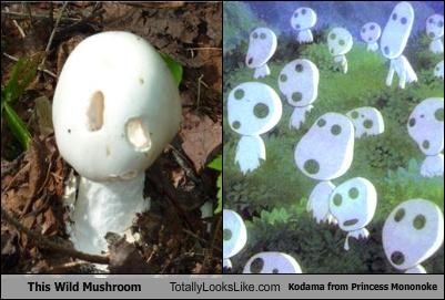 This Wild Mushroom Totally Looks Like Kodama from Princess Mononoke