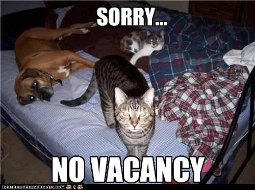 apologies,bed,cat,Cats,mastiff,no vacancy,sorry,two