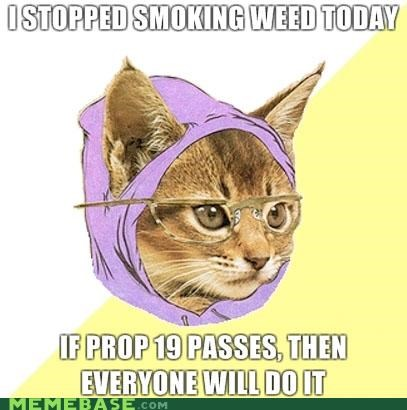 Hipster Kitty is Secretly Glad Prop 19 Failed