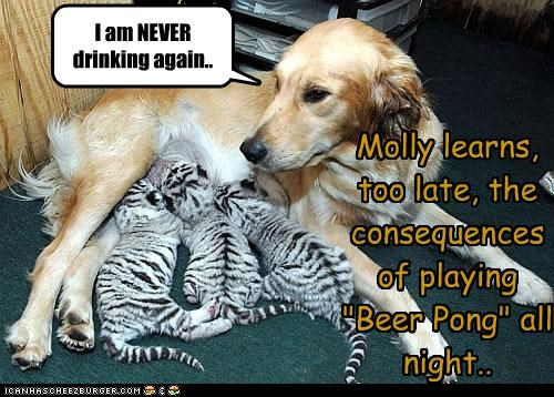 "Molly learns, too late, the consequences of playing ""Beer Pong"" all night.."
