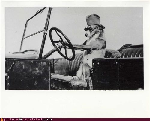 cool,dogs,driving,glasses,vintage,wtf