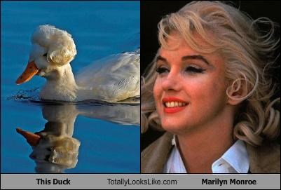 This Duck Totally Looks Like Marilyn Monroe