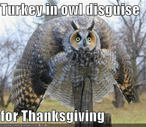 Turkey in owl disguise  for Thanksgiving