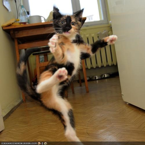 cyoot kitteh of teh day,jumping,karate,kick