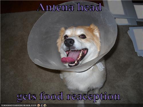Antena head  gets food reaception
