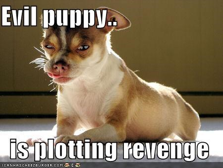 Evil puppy..  is plotting revenge