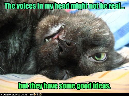 advice,caption,captioned,cat,crazy eyes,good,Hall of Fame,ideas,imaginary,justification,LOLs To Go,voices