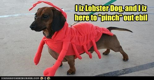 costume,dachshund,dressed up,evil,lobster,pinch,pun,superhero
