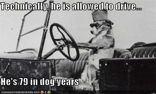 Technically, he is allowed to drive...  He's 79 in dog years