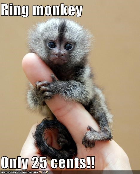 25 cents,caption,captioned,cute,finger,grabbing,monkey,price,quarter,ring