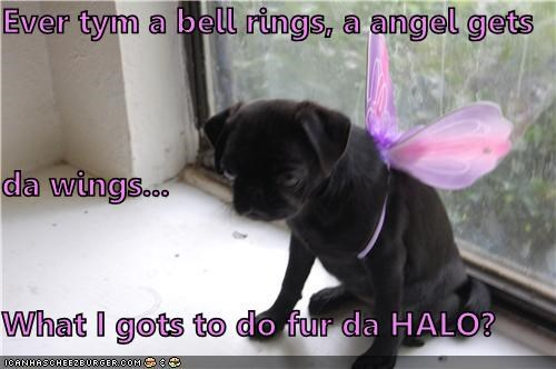 Ever tym a bell rings, a angel gets   da wings... What I gots to do fur da HALO?