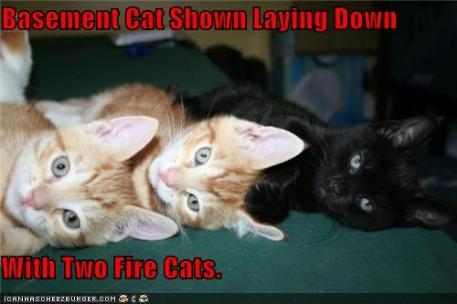 Basement Cat Shown Laying Down  With Two Fire Cats.