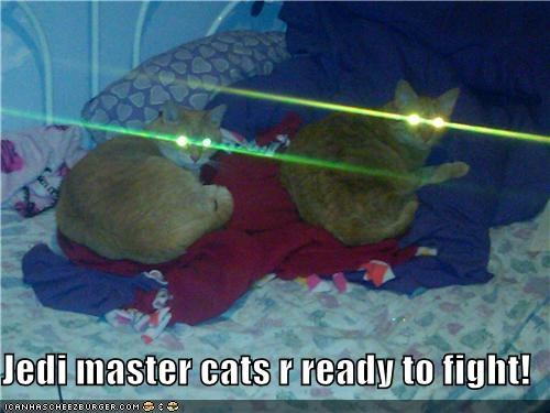 Jedi master cats r ready to fight!