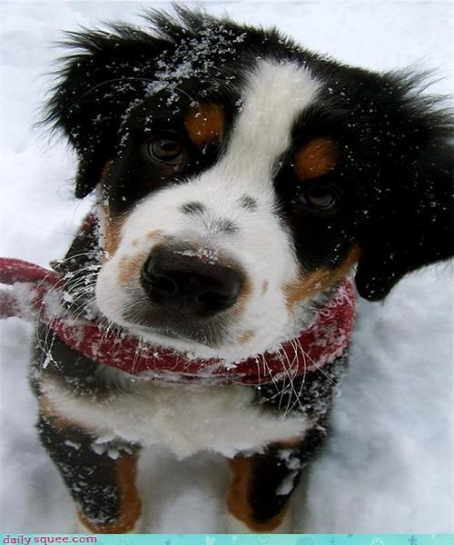 Beautiful snow dog