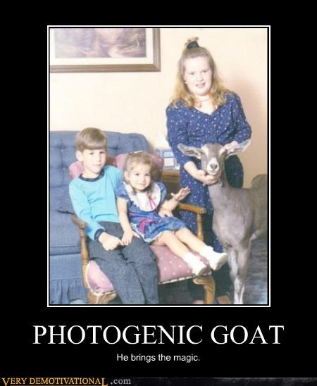 PHOTOGENIC GOAT
