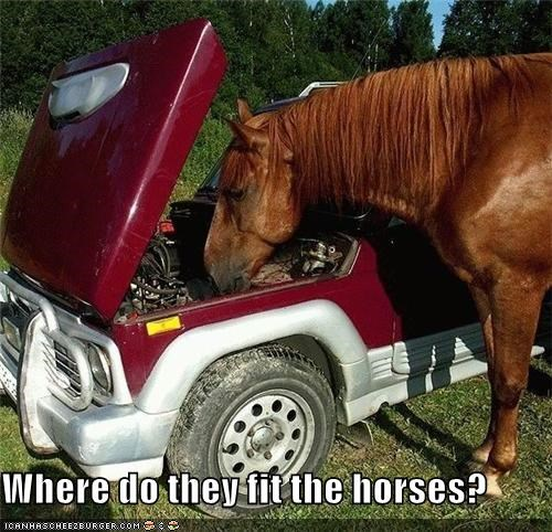 Where do they fit the horses?